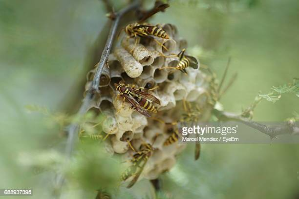 close-up of paper wasps on nest - paper wasp stock pictures, royalty-free photos & images
