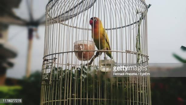 close-up of parakeet in cage - 鳥篭 ストックフォトと画像