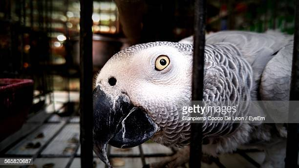 Close-Up Of Parakeet In Cage