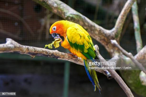 Close-Up Of Parrot Perching On Bare Tree
