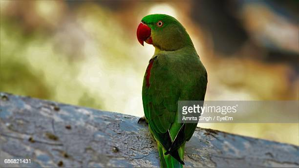 Close-Up Of Parrot Perching On Leaf