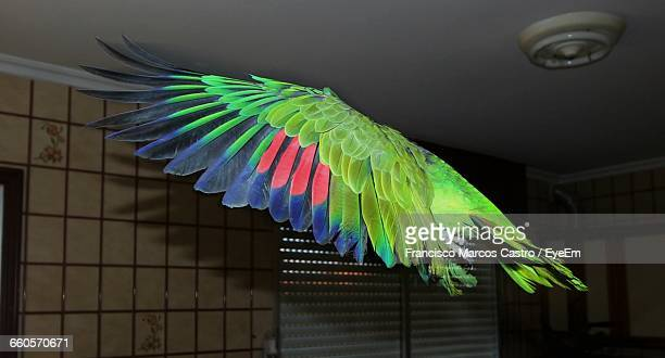 close-up of parrot wings - parrot stock pictures, royalty-free photos & images