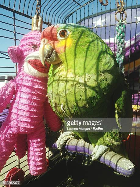 Close-Up Of Parrot With Monkey Toy In Birdcage