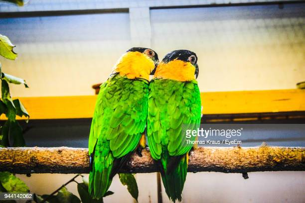 close-up of parrots perching on branch - one animal stock pictures, royalty-free photos & images