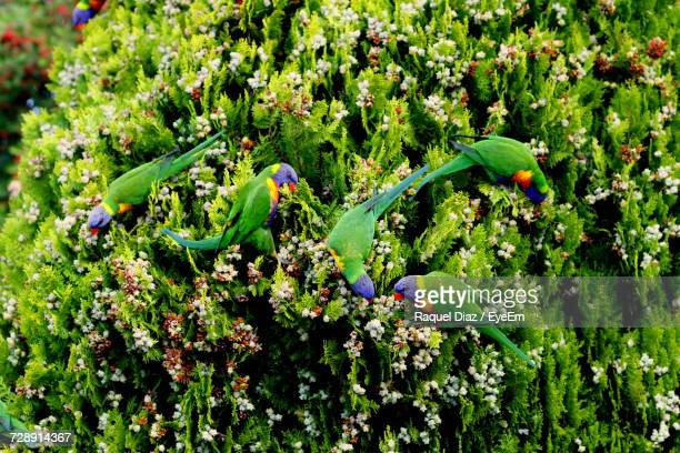 Close-Up Of Parrots Perching On Tree