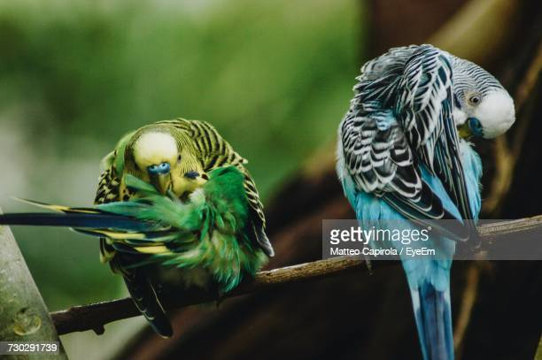 Close-Up Of Parrots Perching