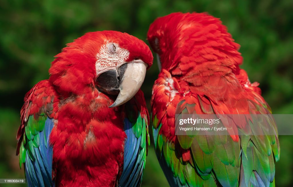 Close-Up Of Parrots : Stock Photo