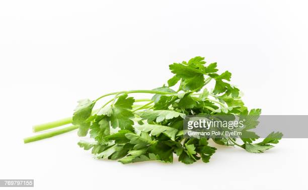 Close-Up Of Parsley Against White Background