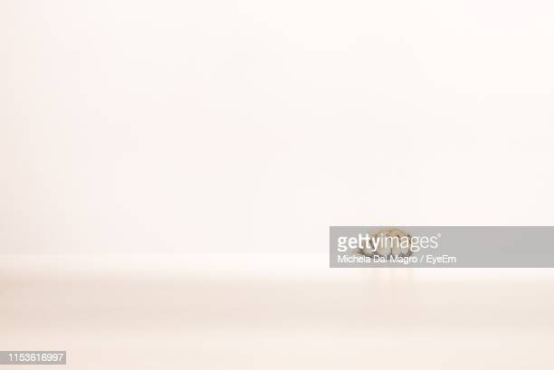close-up of paw against white background - paw stock pictures, royalty-free photos & images