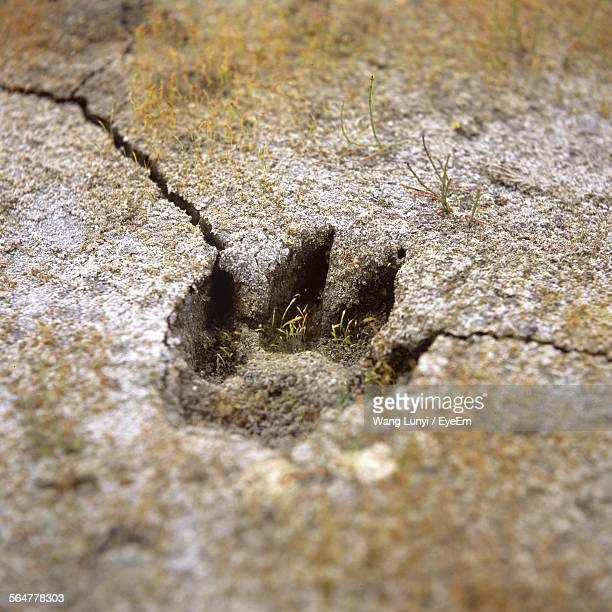 Close-Up Of Paw Print On Ground