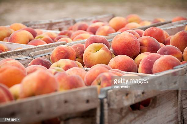 close-up of peach crates - peach stock photos and pictures