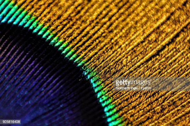 close-up of peacock feather - peacock stock pictures, royalty-free photos & images