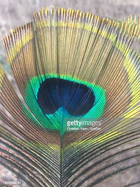 close-up of peacock feathers - netanya stock pictures, royalty-free photos & images
