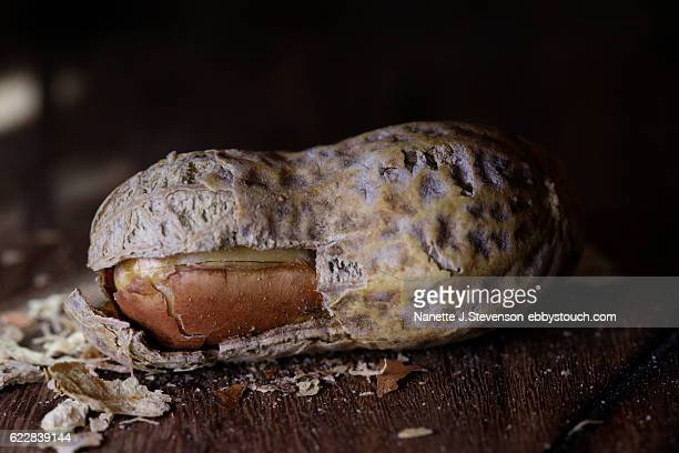 closeup of peanut on tabletop - nanette j stevenson stock photos and pictures