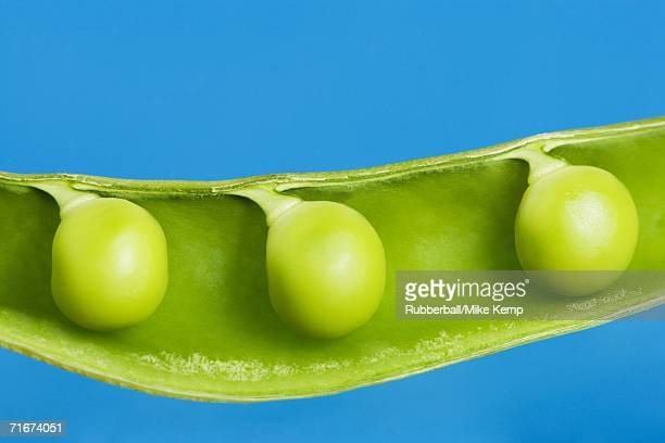 Close-up of peas in a pod