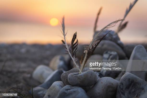 close-up of pebbles on beach - fehmarn stock-fotos und bilder