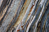 https://www.istockphoto.com/photo/the-birch-bark-texture-or-background-gm954349708-260558766