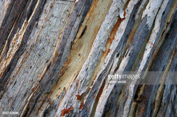 close-up of peeling bark on the trunk of a eucalyptus tree - eucalyptus tree stock pictures, royalty-free photos & images