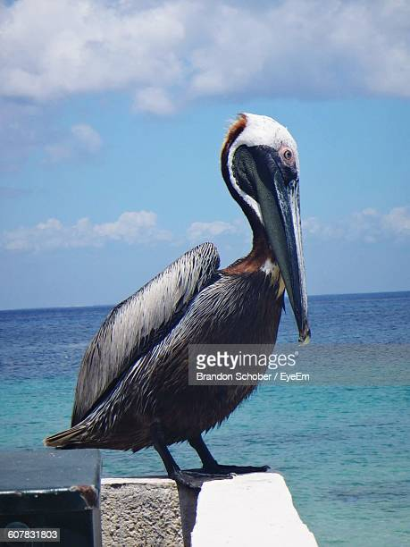 close-up of pelican retaining wall by sea - freshwater bird stock photos and pictures