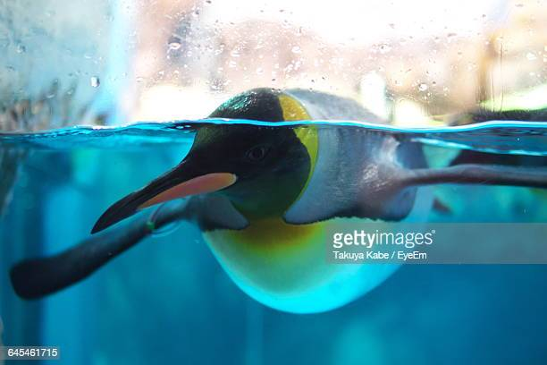 Close-Up Of Penguin Swimming In Water Seen Through Glass