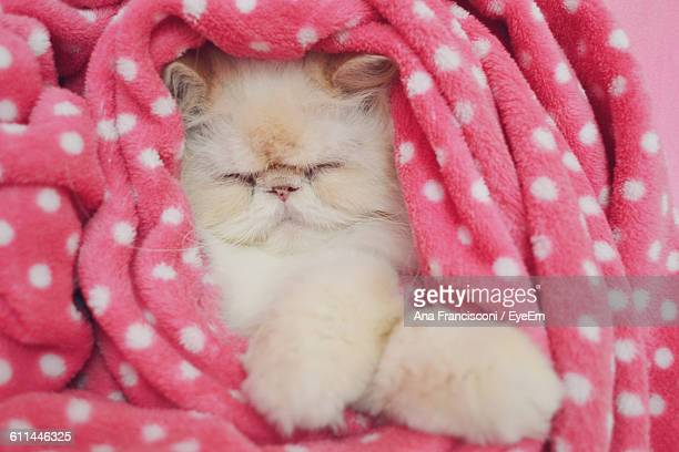 Close-Up Of Persian Cat With Eyes Closed