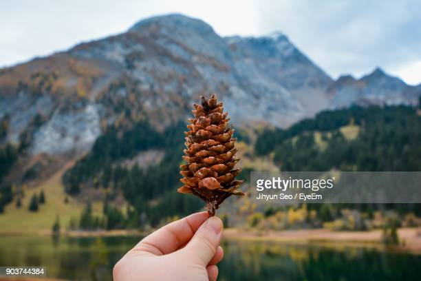 Close-Up Of Person Hand Holding Pine Cone Against Mountain Range