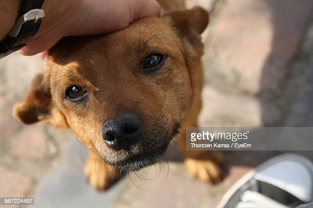 Close-Up Of Person Hand Stroking Puppy