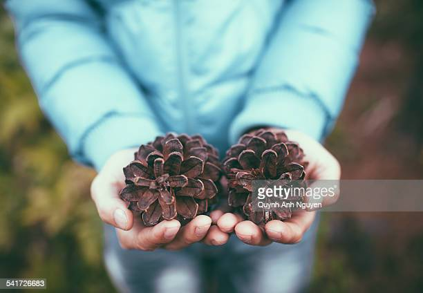 close-up of person hands with pinecones - son la stock pictures, royalty-free photos & images