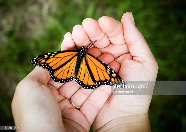 close-up of person holding butterfly in hand - releasing stock pictures, royalty-free photos & images