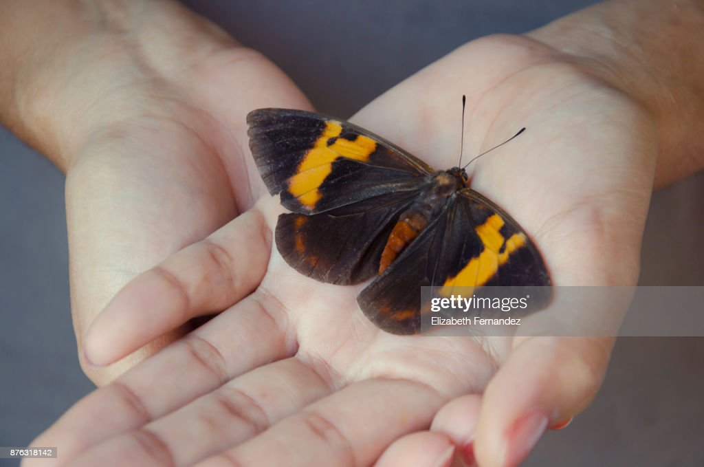 Close-up of Person Holding Butterfly In Hand : Stock Photo