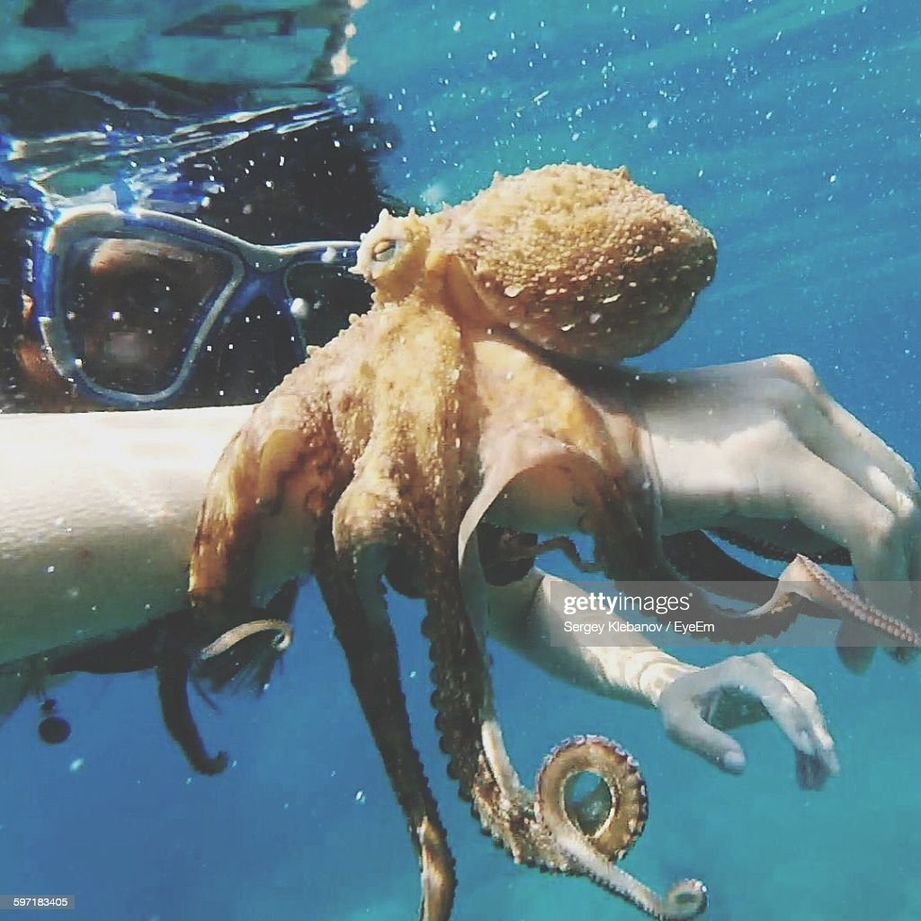 Close-Up Of Person Holding Octopus In Sea : Stock Photo