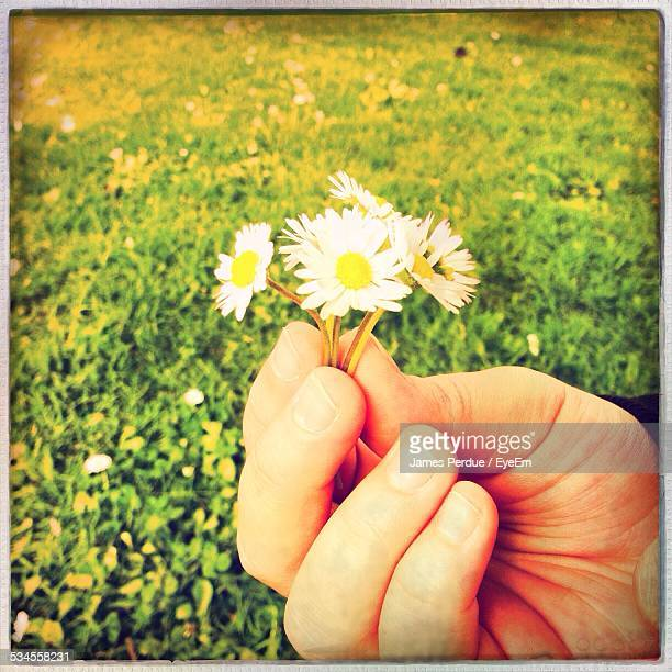 Close-Up Of Person Holding Small White Flowers Against Grassy Field