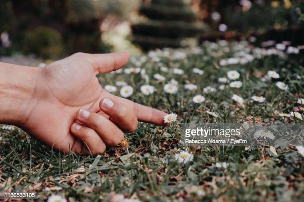Close-Up Of Person Touching Flower On Field
