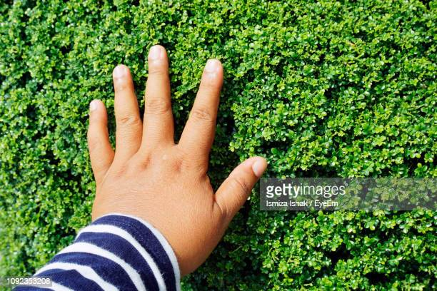 close-up of person touching plants - shah alam stock photos and pictures