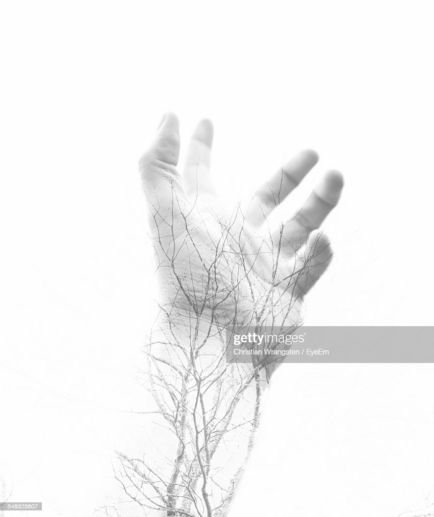 Human Vein Stock Photos And Pictures Getty Images
