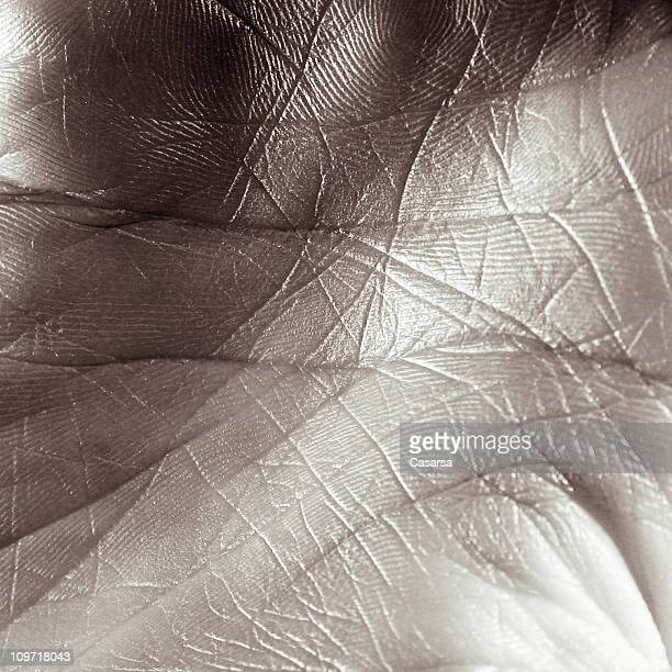 Close-up of Person's Palm, Toned