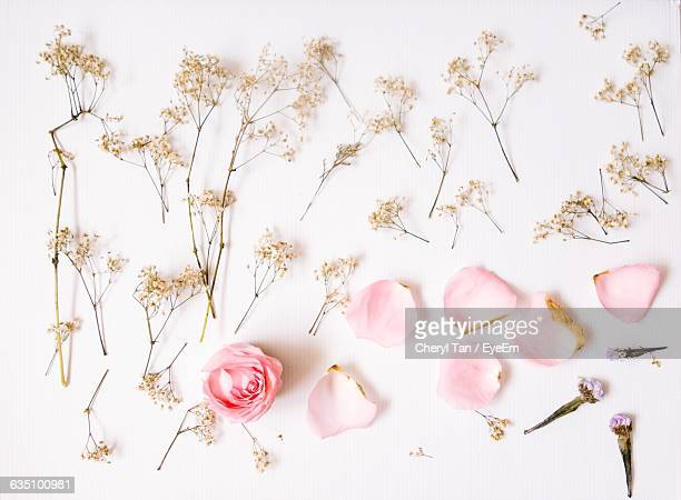 close-up of petals over white background - petal stock pictures, royalty-free photos & images