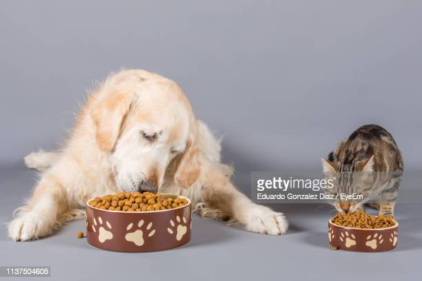 close-up of pets eating food against gray background - pet equipment stock pictures, royalty-free photos & images