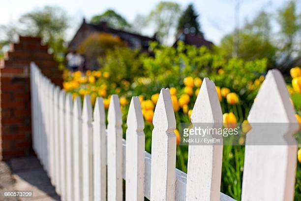 Close-Up Of Picket Fence On Tulip Garden