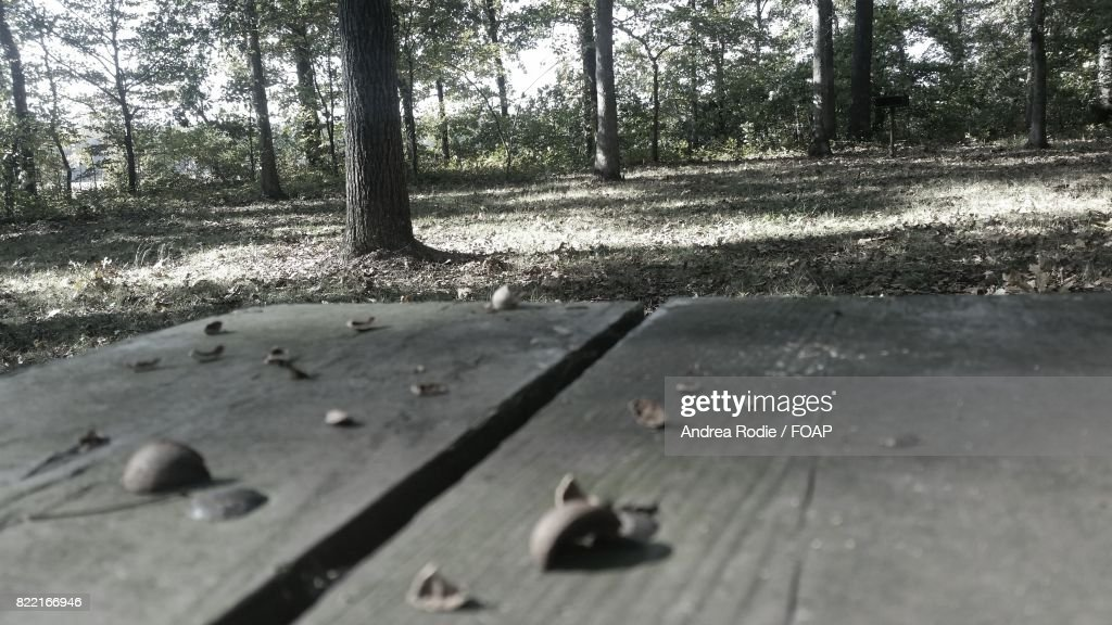 Close-up of picnic bench in forest : Stock Photo