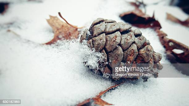Close-Up Of Pine Cone On Snow