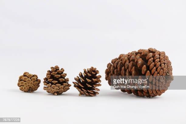 close-up of pine cones against white background - pinecone stock pictures, royalty-free photos & images