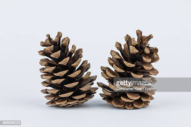 Close-Up Of Pine Cones On White Background