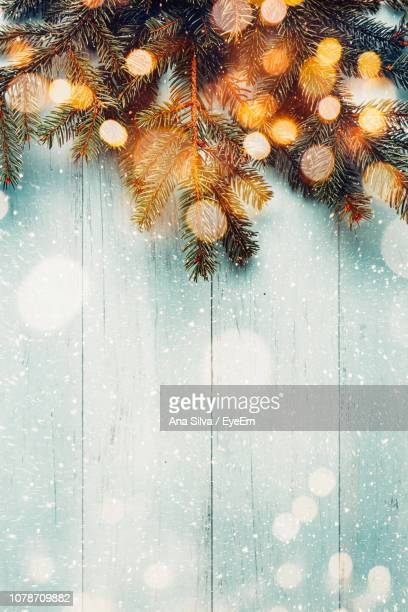 Close-Up Of Pine Tree On Table