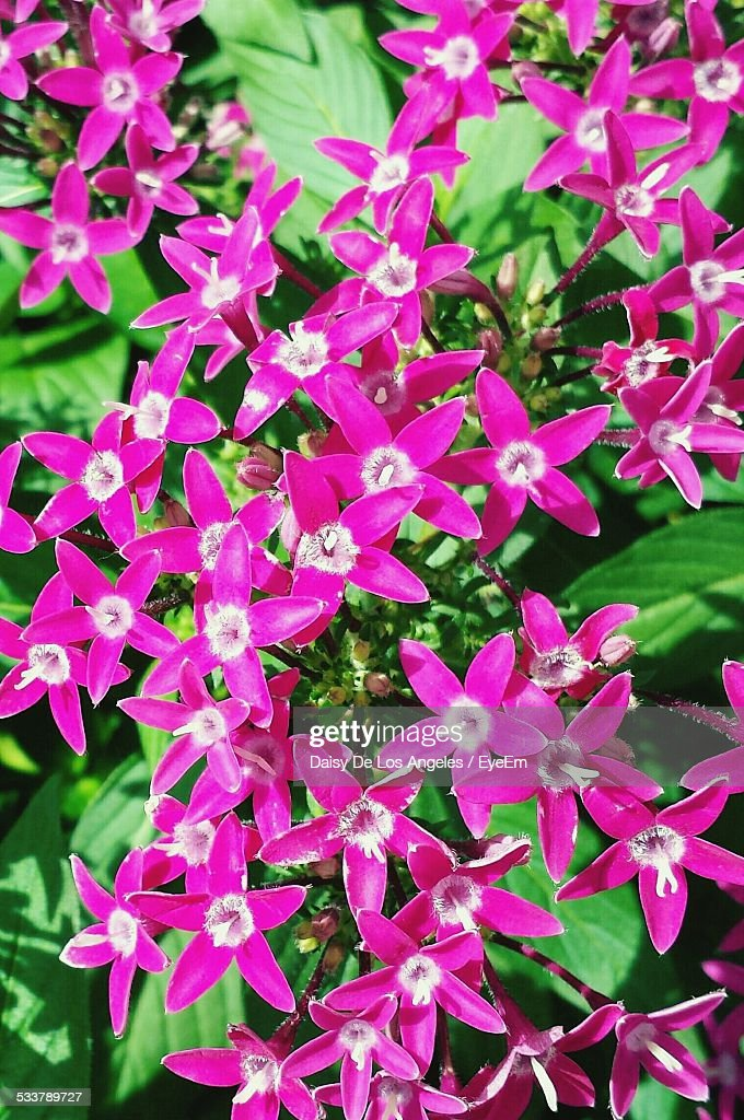 Close-Up Of Pink Color Flowers : Foto stock