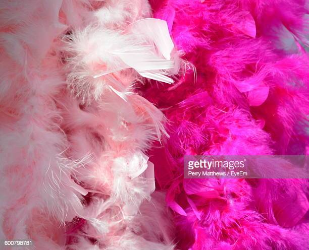 Close-Up Of Pink Feather Boas