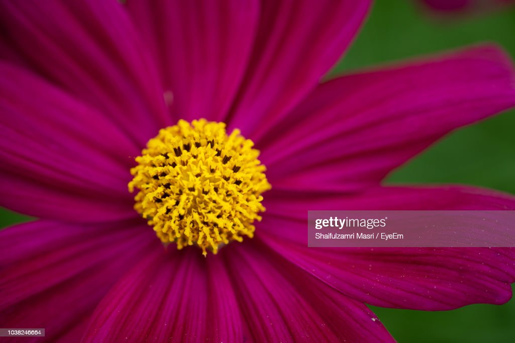 Close-Up Of Pink Flower : Stock Photo