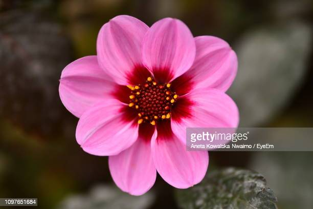 Close-Up Of Pink Flower