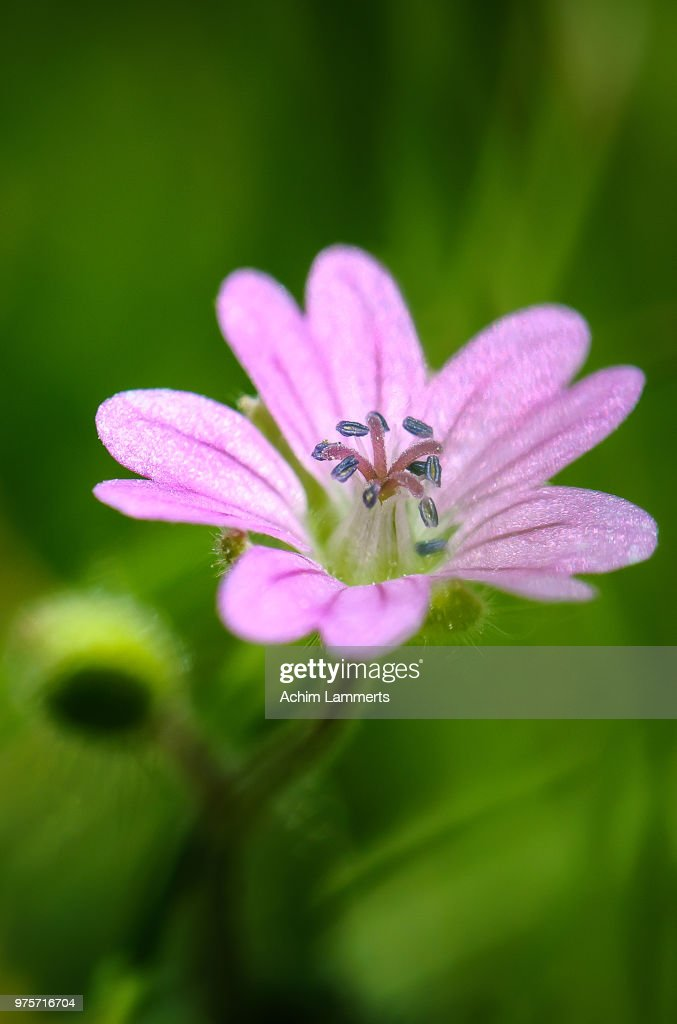 Close-up of pink flower : Stock-Foto