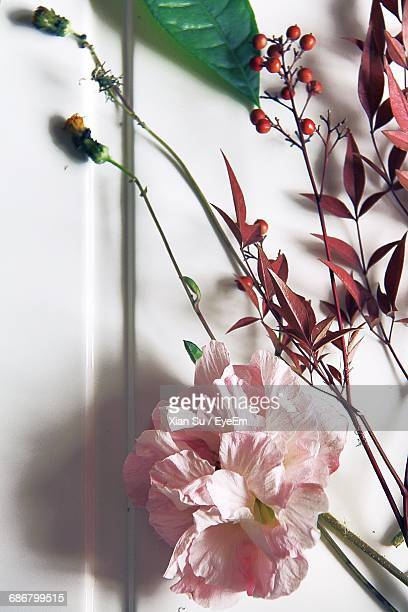 Close-Up Of Pink Flower Plant Against White Wall